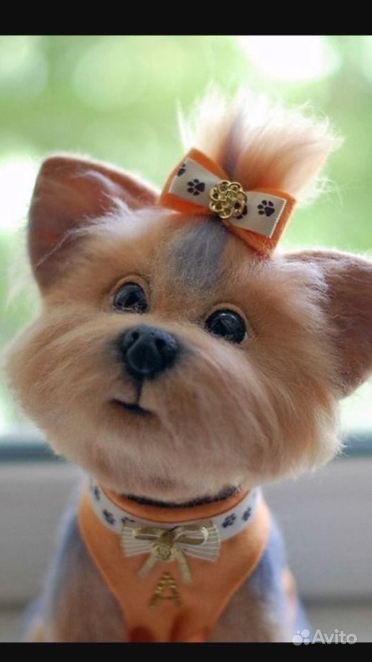 Маленькие собачки в Краснодаре - фотография № 6
