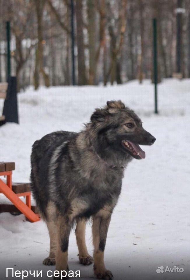 Собака в добрые руки в Москве - фотография № 6