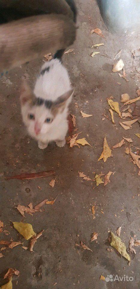 Котенок. Кошечка
