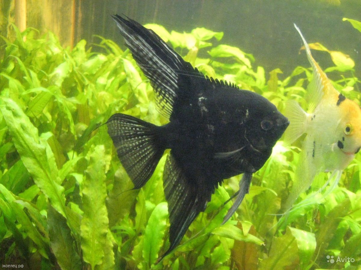 Рыба купить на Зозу.ру - фотография № 7