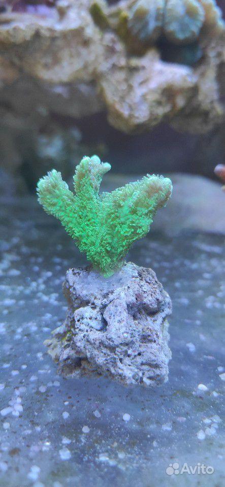 Морские кораллы купить на Зозу.ру - фотография № 2
