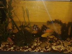 Продам аквариум с рыбками и со всем необходимым
