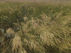 Луговое сено, разнотравья