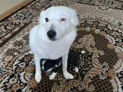 Отдам в добрые руки последнего щенка девочка у мам