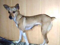 Ищет лучший дом небольшая собачка Лиза
