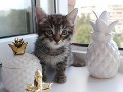 Котенок с коротким хвостиком
