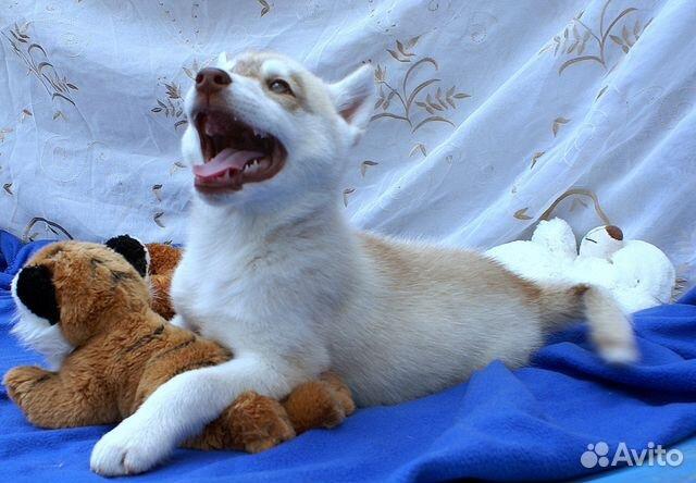 Подать объявление о животных бесплатно в новосибирске работа библиотекаря в ульяновске свежие вакансии