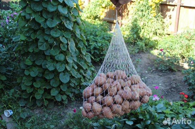 Барнаул сетки для картофеля