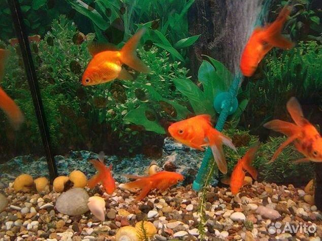 доксициклин для аквариумных рыбок