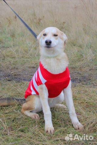 Милашка Собака подросток Эви в дар купить на Зозу.ру - фотография № 8