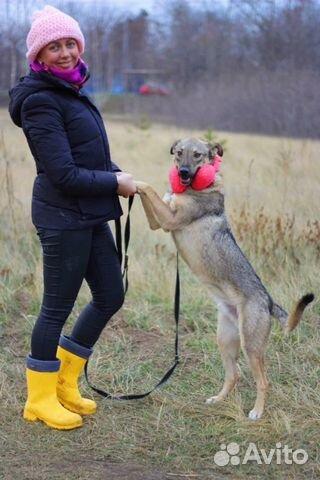 Собака очаровашка Смайл в дар купить на Зозу.ру - фотография № 1