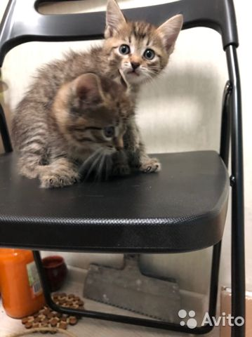 Kittens, kids month, a girl and a boy