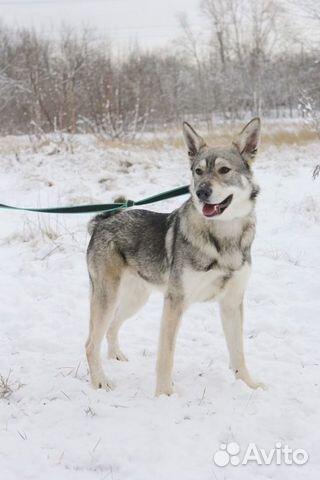 Пёс компаньон в добрые руки купить на Зозу.ру - фотография № 1