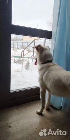 Крошка Долли в добрые руки купить на Зозу.ру - фотография № 6