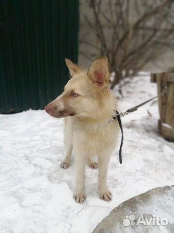Красивейший щенок из приюта ищет дом