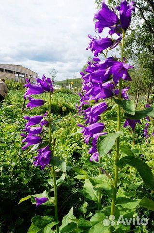 Цветы садовые купить 6