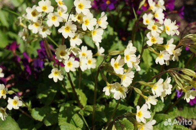 Цветы садовые купить 9