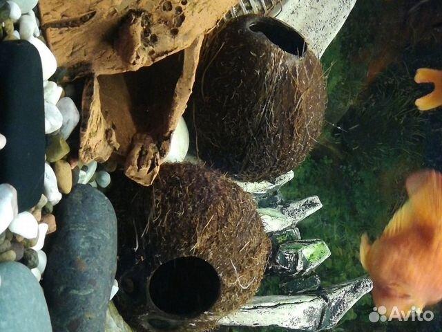 Декор-кокос натуральный  89538576901 купить 3