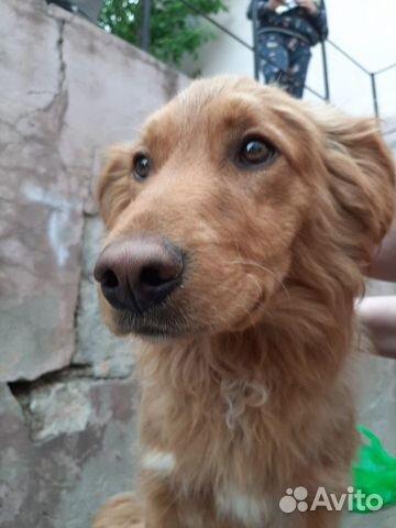 Детские собаки  89372153883 купить 4