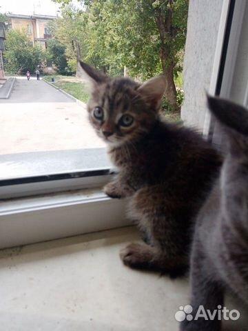Котята в добрые руки  89000940784 купить 1