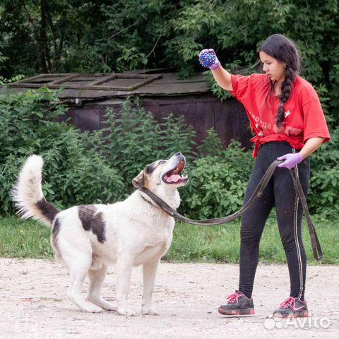 Отдается щенок-подросток в добрые руки  89036455444 купить 4