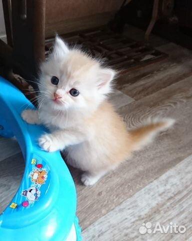 Котята в добрые руки  89272793404 купить 2