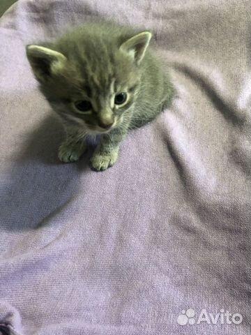 Котятки  89109732623 купить 4