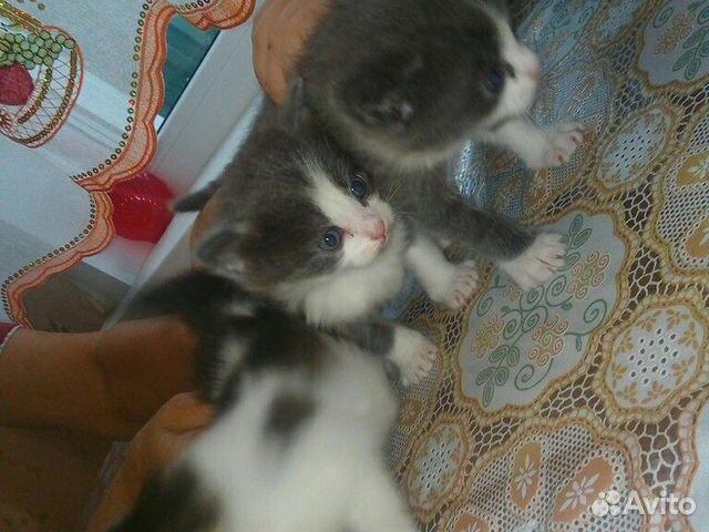 Отдам котят бесплатно  89835502472 купить 1