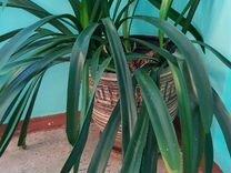 Комнатные цветы — Растения в Саратове