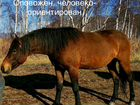 Лошадь мерин жеребчик
