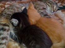 Котята дву-х месячные