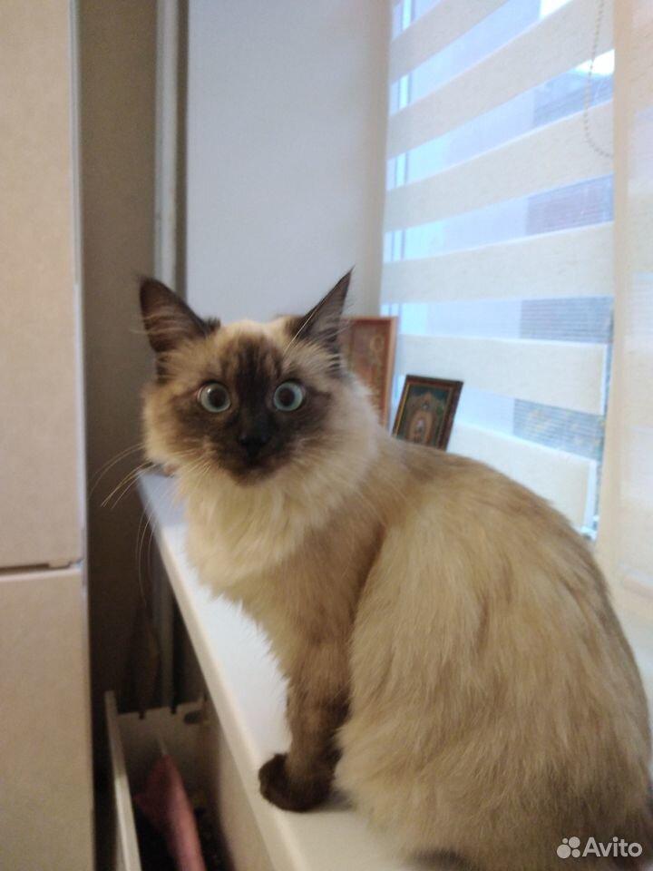 Кошка 89875673264 купить 2