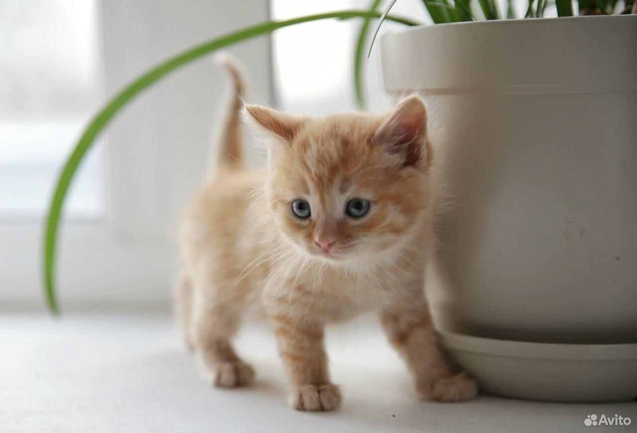 Отдам котят  89129770244 купить 2