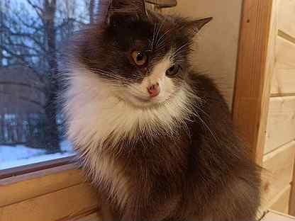 Кошечка, ещё котенок. Добрая, ласковая, но немного