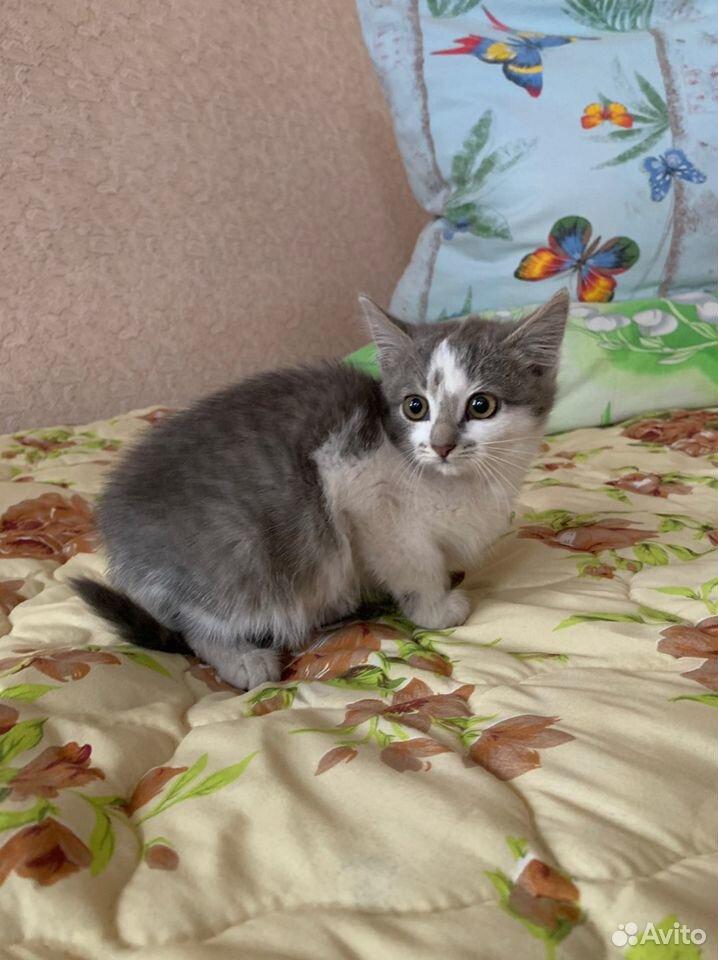 Котята в добрые руки бесплатно  89876955069 купить 1