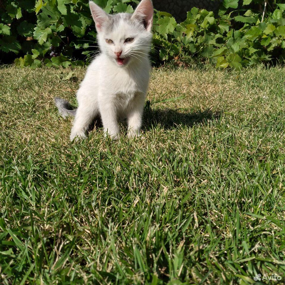Кошка  89033994800 купить 2
