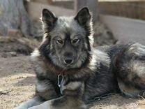 Собачка Селена