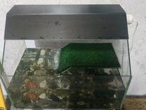 Красноухие черепашки с акватеррариумом