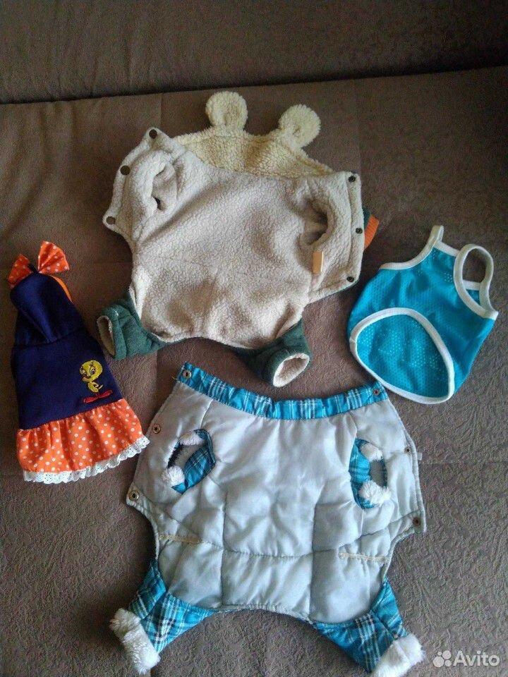 Одежда для собачки  89241141684 купить 2