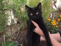 Кошечка в добрые руки — Кошки в Геленджике