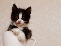 Маленькая кошечка в добрые руки